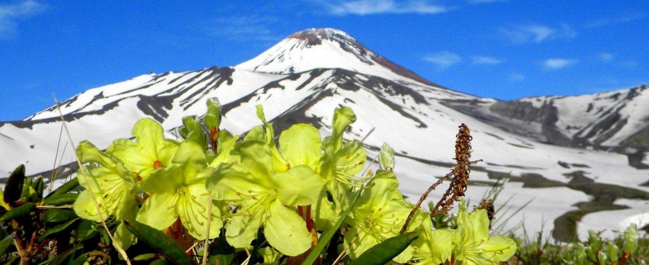 Туры на Камчатку, Камчатский экспресс, Авачинский вулкан