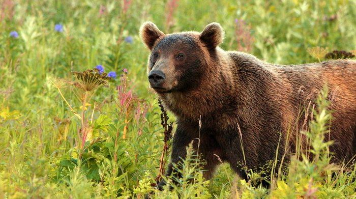 Экскурсии на Камчатке, Курильское озеро, медведи